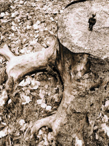 Die kleine Eva.2020 auf einem Baumstumpf, blickt in den Wald und merkt, wie unwichtig wir sind